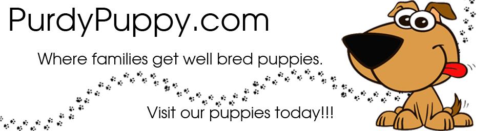 Purdypuppy.com