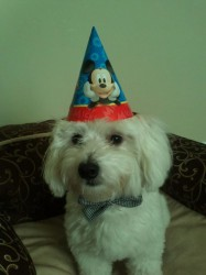murphy first birthday.jpg