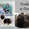 Kookie & Dino - CKC Registered Purebred Havanese