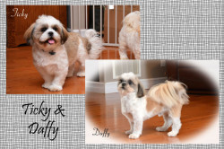 Ticky&Daffy