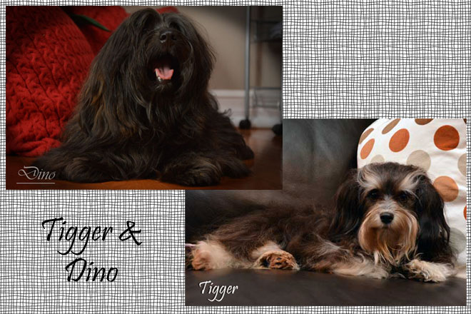Tigger&Dino