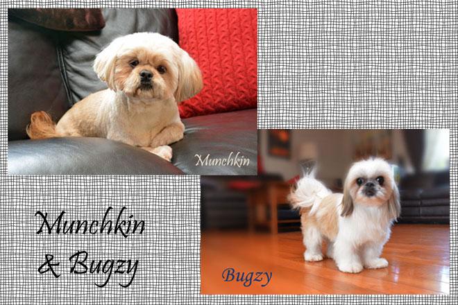 Munchkin&Bugzy
