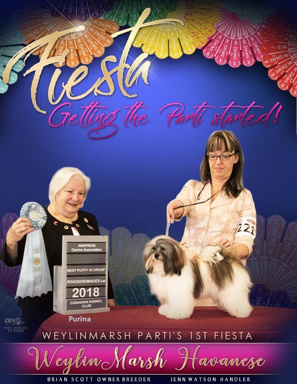 CH WeylinMarsh's Parti's 1st Fiesta - call name Fe Fe