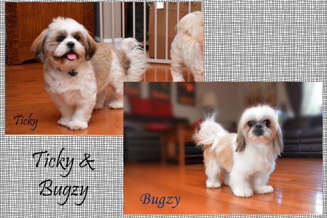 Ticky&Bugzy