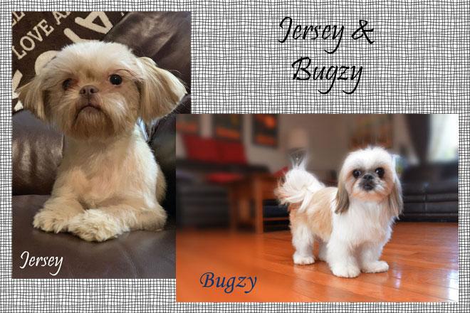 Jersey&Bugzy